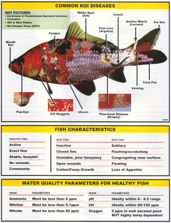 Important information on aeration for Koi pond water quality